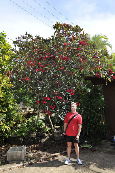 Red garden variety, Kauai, Hawaii.