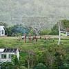 Old Plumeria Tonga