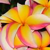 Koko Crater Botanic Garden, Hawaii.