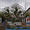 Plumeria <br /> Location: Vavau, Tonga.