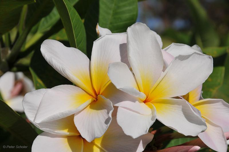 National Tropical Botanical Gardens<br /> Kauai, Hawaii.<br /> Lawa'i Road, Po'ipu, South Kauai.