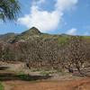 Honolulu Koko Crater Botanic Gardens