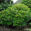 Limahuli Garden and Preserve, National Tropical Botanical Gardens. Kauai