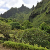 Limahuli Garden and Preserve, National Tropical Botanical Gardens. Kauai.