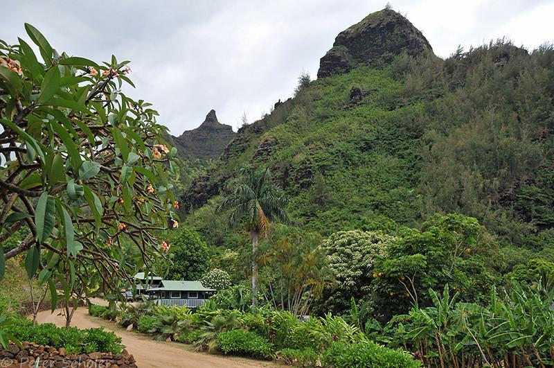 Limahuli Garden and Preserve, National Tropical Botanical Gardens. Kauai.