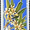 "Plumeria acutifolia<br /> 1971<br /> Congo<br /> République du Congo<br /> A country in Central Africa<br /> <a href=""http://fr.wikipedia.org/wiki/R%C3%A9publique_du_Congo"">http://fr.wikipedia.org/wiki/R%C3%A9publique_du_Congo</a>"