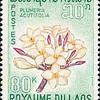 Plumeria acutifolia<br /> 1967<br /> Laos<br /> Southeast Asia.<br /> Pagoda Tree