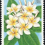 "Plumeria alba<br /> 1978<br /> Polynesian island nation<br /> Formerly known as the Ellice Islands<br /> <a href=""http://en.wikipedia.org/wiki/Tuvalu"">http://en.wikipedia.org/wiki/Tuvalu</a><br /> White Frangipani"