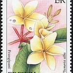 Plumeria alba<br /> 1991 British Virgin Isands<br /> White Frangipani