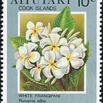 Plumeria alba<br /> 1994<br /> Cook Islands<br /> White Frangipani