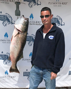 Ronald Rego caught this 35.6 lb striper in the Cape Cod Canal which won 1st Place in the Plymouth 400 Bass & Blue Tournament last weekend.  Courtesy Photo/Plymouth 400 Inc.  Wicked Local Photo/Denise Maccaferri