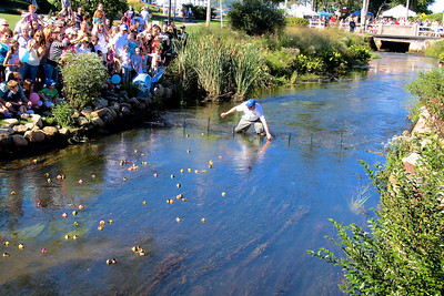 Plymouth Chamber of Commerce Executive Director Dens Hanks, plucks out the first three ducks to reach the finish line of the Ducky Dash .