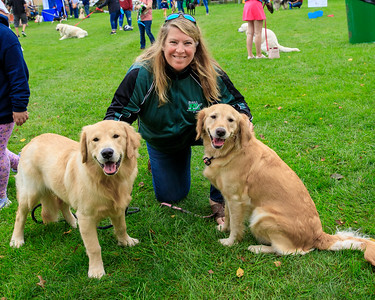 Marci Lucier of Duxbury poses with her golden retrievers Kona 4, and Bruin, the 8 month old son of Kona.