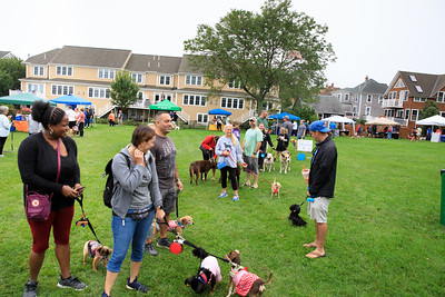 Dog owners line up for rabbis shots by Vet Pet Pals at the Bark in the Park event  last Saturday.
