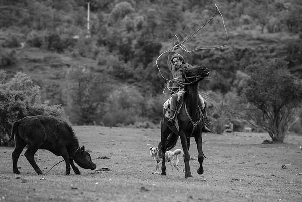 Los animales al servicio del hombre gaucho. Sin animales no hay gaucho. Mallín Grande 2017