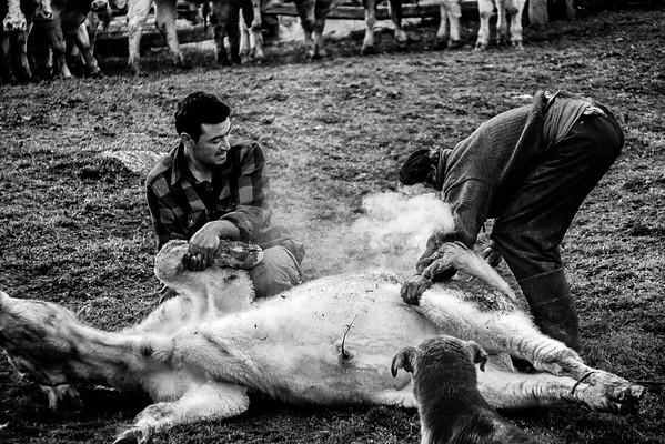 Don Eraldo marcando animales. Río Bravo 2006