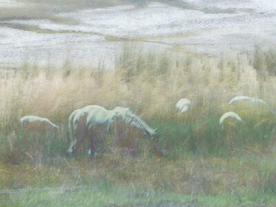 white horse ipad