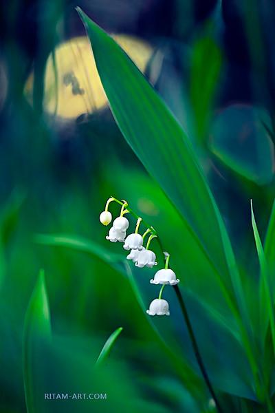 Весна. Лунная соната / Spring. Moonlight Sonata