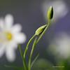 Весенняя нежность / Spring Tenderness
