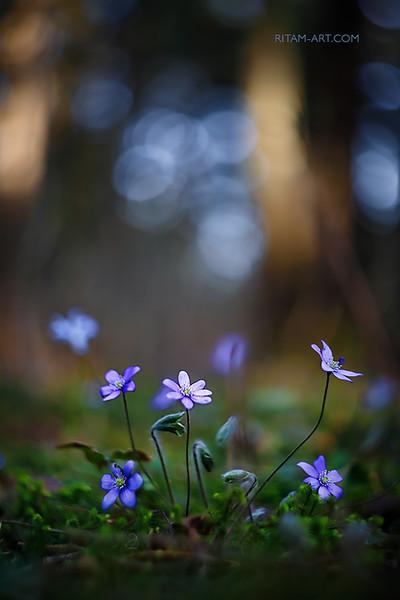 Весенние красотки / Spring Beauties