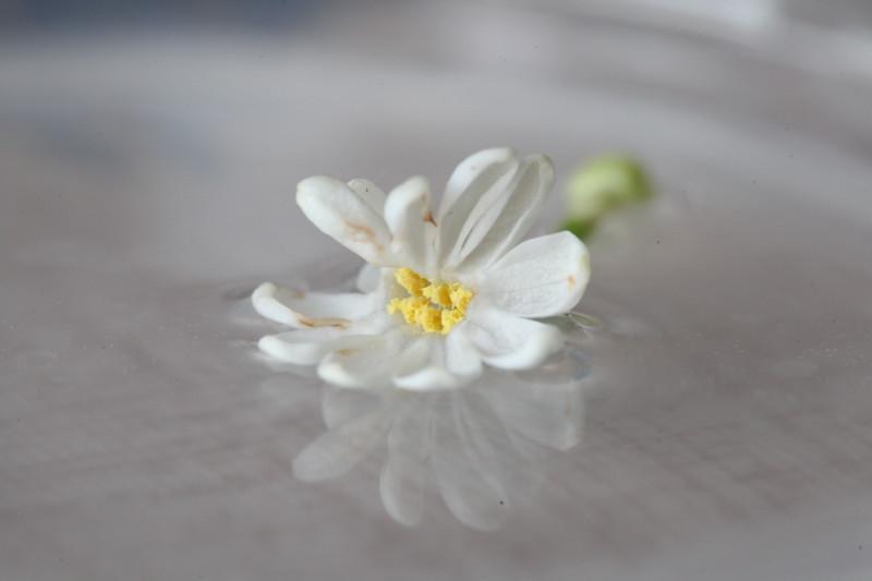 Белые цветы<br /> Ритам Мельгунов<br /> Белые цветы —<br /> Нежные снежинки,<br /> Звезды красоты,<br /> Чистых душ искринки —<br />  <br /> Белая роса<br /> Зорь счастливых мая,<br /> Дивные глаза,<br /> Что на мир взирают, —<br /> <br /> Рой, что вдруг слетел<br /> С кисти вдохновенной,<br /> В белой красоте<br /> Трепетно-блаженный,<br /> <br /> Как душистый снег<br /> В муравах весенних, —<br /> Изумрудный брег<br /> В белозвездной пене —<br /> <br /> Кипень звездных волн<br /> На смарагде вешнем,<br /> Выткавшая дерн<br /> Кружевом безгрешным…<br /> <br /> Белые цветы —<br /> Чистых грез хоралы,<br /> Тонкой красоты<br /> Нежные кристаллы,<br /> <br /> Ноты звездных од,<br /> Россыпи восторга —<br /> Радостный народ<br /> Райских рощиц Бога, —<br /> <br /> Вьют ваш тонкий цвет<br /> Брызги ливней мая,<br /> Рек астральных свет<br /> В лепестках мерцает…<br /> <br /> Цвет родных полей,<br /> Чудный, хоть неброский,<br /> Нет тебя милей,<br /> Цвет раздолий росских!<br /> <br /> Кроткие цветы,<br /> Чья краса живая<br /> От сует пустых<br /> Душу омывает, —<br /> <br /> В вас сияет нам<br /> Сказка таинств чистых —<br /> Чудо-письмена,<br /> Вязь стихов лучистых —<br /> <br /> Явь мечты, чей пыл<br /> Взрос цветком из тлена,<br /> В хрупкий цвет вселил<br /> Миг красы нетленной, —<br /> <br /> Взгляд любви, чей смех<br /> В прахе смог раскрыться,<br /> Распахнув для всех<br /> Лепестки-ресницы:<br /> <br /> Белых лепестков<br /> Чистое Писанье<br /> Нам гласит без слов<br /> Тайну мирозданья:<br /> <br /> Звездочки-цветы,<br /> Белые искринки —<br /> Горней чистоты<br /> Хрупкие дождинки,<br /> <br /> Звездных крыл пыльца —<br /> В вас мы видим ясно,<br /> Что рукой Творца<br /> Создан мир прекрасный! —<br /> <br /> В вас лучится нам<br /> Чудо-откровенье:<br /> Бог — во всем, Он сам<br /> Жив в Своих твореньях! —<br /> <br /> И Душа Творца<br /> Зрит на нас цветками,<br /> Чтоб у нас в сердцах,<br /> Дрогнув лепестками,<br /> <br /> Зову красоты<br /> Отзываясь 