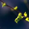Весна - рождение новой жизни / Spring - The Birth of a New Life