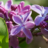 Spring. The Flower of  Luck / Весна. Счастливый цветок