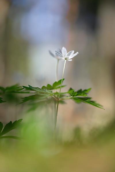 Весна - Белый танец / Spring - The White Dance