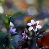 Fantasies of Spring - Spring Flowers / Фантазии Весны - весенние цветы