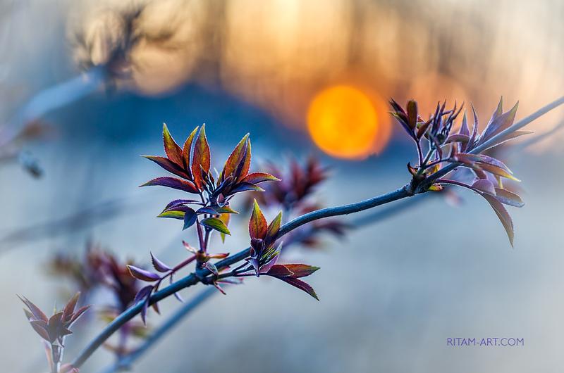 Весеннее Искусство / The Spring-Art