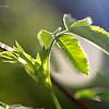 Новая жизнь - поэзия Весны / The New Life - Poetry of Spring