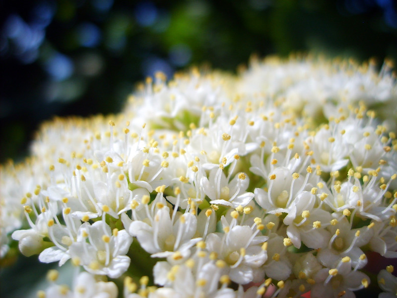 Вешний цвет / Spring Blossom