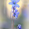 Весна - Да будет Свет! / Spring - Let There Be Light!