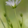 White Tenderness / Белая нежность