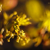 Золотая сказка Весны / The Golden Fairytale of Spring