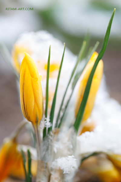Весна побеждает / Spring is conquering
