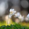 Белые грезы Весны