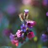 Весна цветет / Spring is Blooming
