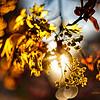Весна - Вторжение Света / Spring - The Invasion of Light