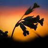 Весна - Закатная магия / Spring - Sunset Magic