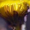 """Птица Весны<br /> <br /> Птица Весны<br /> Парит над землей,<br /> К душам земным<br /> Слетает красой —<br /> <br /> Тем, кто так ждал,<br /> Сыплет цветы, —<br /> Всем, кто так звал,<br /> Дар Красоты —<br /> <br /> Тем, кто мечтал,<br /> Крылья дарит,<br /> Тех, кто устал,<br /> Песнью живит.<br /> <br /> Тех, кто поник,<br /> Кто уж не ждет,<br /> Птица Весны<br /> Ввысь вознесет!..<br /> <br /> <br /> Стихи и фото:<br /> Ритам Мельгунов<br /> Весна 2011 г.<br /> <br /> Photo and poem:<br /> Ritam Melgunov<br /> <br /> <br /> Из фотопоэтического цикла «Поэзия Весны»:<br /> <a href=""""http://www.stihi.ru/avtor/ritam1&book=28#28"""">http://www.stihi.ru/avtor/ritam1&book=28#28</a>"""