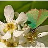 Зеленая Фея Весны / The Green Fairy of Spring