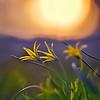 """Весна земли<br /> <br /> В радости взмывает<br />   Сердце в вышину!<br /> Сердце призывает<br />   Божию весну!<br /> Сердце призывает<br />   Божий вешний цвет,<br /> Что земле подарит<br />   Золотой расцвет —<br /> Вновь земле подарит<br />   Золотой рассвет,<br /> Всех существ избавит<br />   От смертей и бед!..<br /> <br /> О весна златая,<br />   Расцвети сей час!<br /> Новь твоя младая<br />   Пусть вскипает в нас,<br /> Влей земле усталой<br />   Новых соков кровь,<br /> В том, что угасало,<br />   Пробуди любовь,<br /> В том, что умирало,<br />   Радость пробуди,<br /> Чтоб не умолкала<br />   Сердца песнь в груди,<br /> Чтоб от вешних ливней<br />   Вдруг проснулись мы<br /> И спаслись счастливо<br />   Из сковавшей тьмы —<br /> Вдруг спаслись счастливо<br />   Из кошмарных снов,<br /> Сбросили игриво<br />   Власть веков-оков…<br /> <br /> О весна златая,<br />   Обними весь мир!<br /> Пусть кругом витает<br />   Сладкий твой эфир,<br /> Пусть вспоит всю землю<br />   Твой счастливый мед,<br /> Цвет твой, все объемля,<br />   Всюду расцветет,<br /> Чтобы жизнь земная<br />   Сызнова взросла<br /> И любовь иная<br />   На земле взошла!..<br /> <br /> О весна златая,<br />   Землю обнови,<br /> Красотой взвивая<br />   Мир к твоей Любви!<br /> Пусть же в вешнем пенье<br />   Вышний глас вспоет!<br /> Пусть в златом цветенье<br />   Божий лик цветет!<br /> <br /> <br /> <br /> Стихи и фото:<br /> Ритам Мельгунов<br /> 21 — 22 — 24.04.2011<br /> Ташкент<br /> <br /> Photo and poem:<br /> Ritam Melgunov<br /> <br /> <br /> Из фотопоэтического цикла «Поэзия Весны»:<br /> <a href=""""http://www.stihi.ru/avtor/ritam1&book=28#28"""">http://www.stihi.ru/avtor/ritam1&book=28#28</a>"""