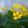 Весенняя нежность / Spring Tendernes