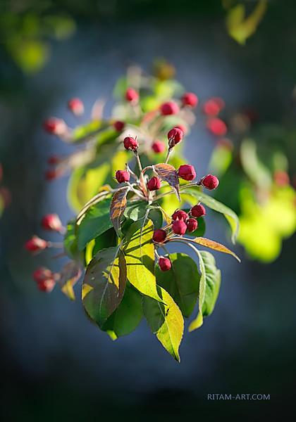 Рубины Весны / The Rubies of Spring