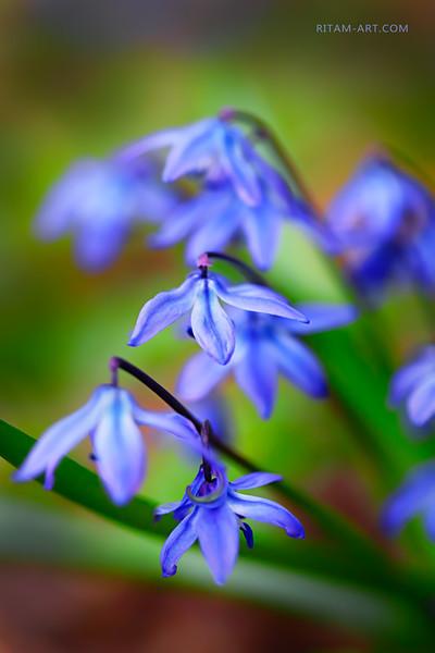 Мелодия Весны / Melody of Spring