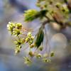 Весны живые акварели / The Living Aquarelles of Spring