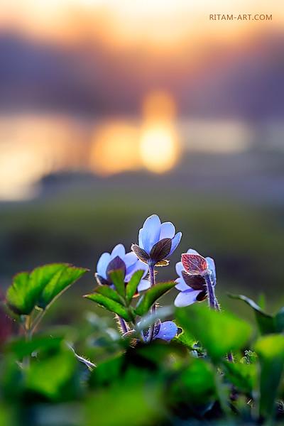 Весенняя магия / The Spring Magic
