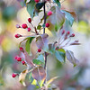 Поэзия Весны - Весенняя живопись / The Poetry of Spring - Spring Painting