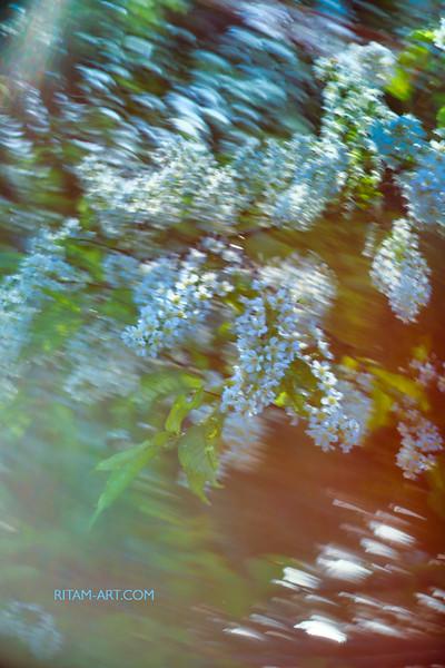 Весенний танец / Spring Dance